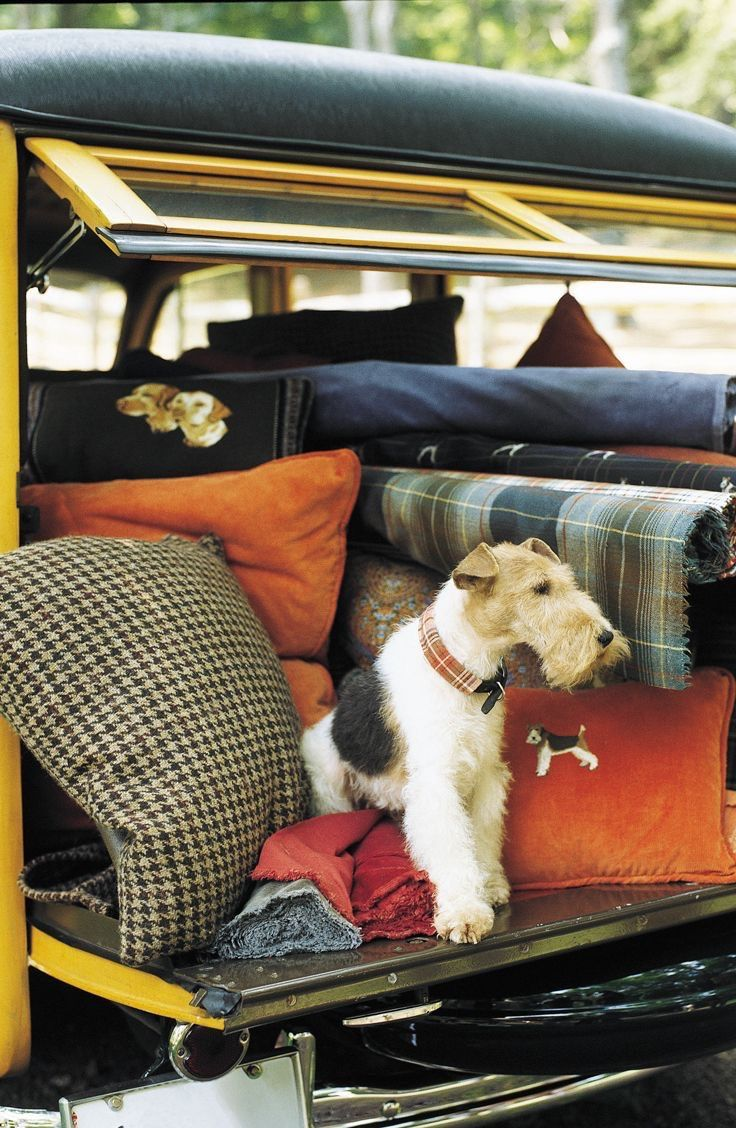 The Preppy Fox — thepreppyfox: #Ralph Lauren #Dogs #Preppy #Sloane...