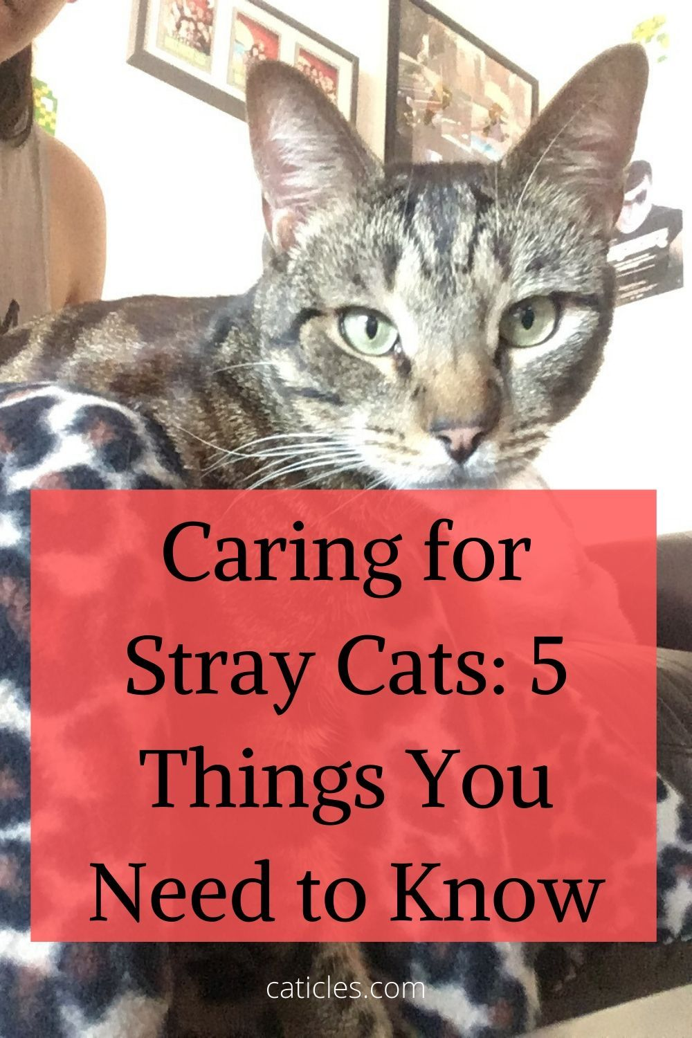Adopting a Stray Cat 5 Things You Need to Know in 2020