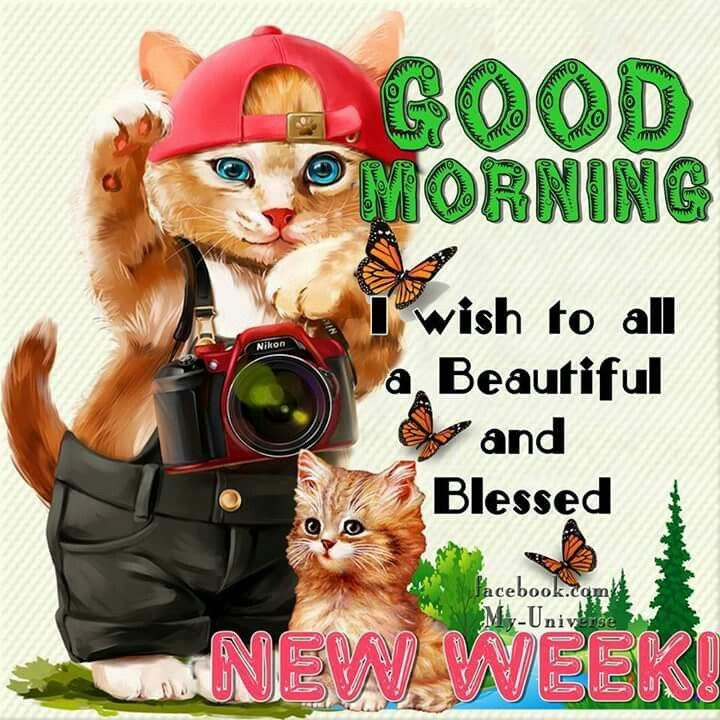 Image result for happy monday cat picmix