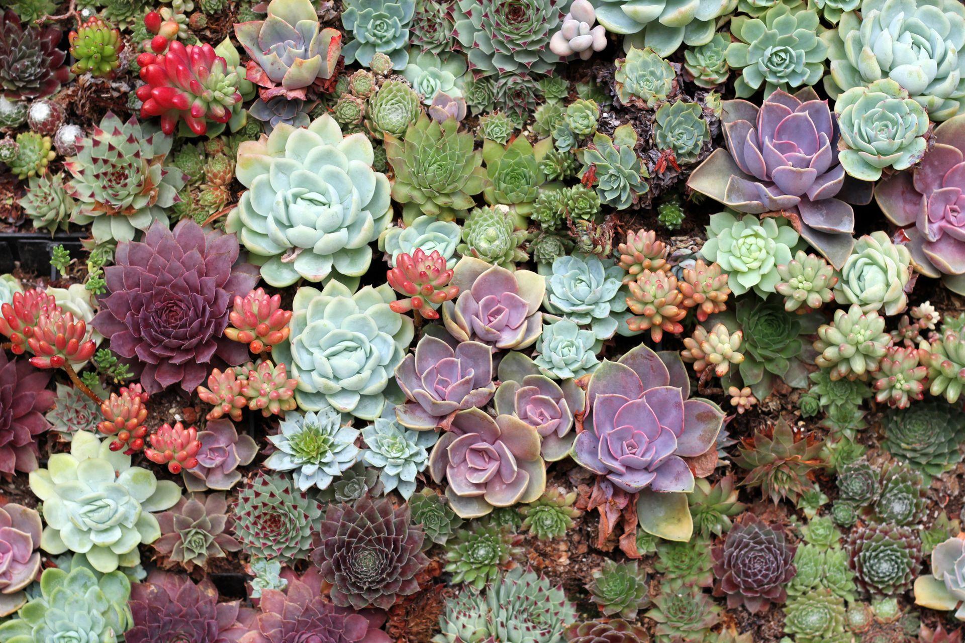 15133511775_d10d2184cb_o.jpg (1920×1280) Succulents