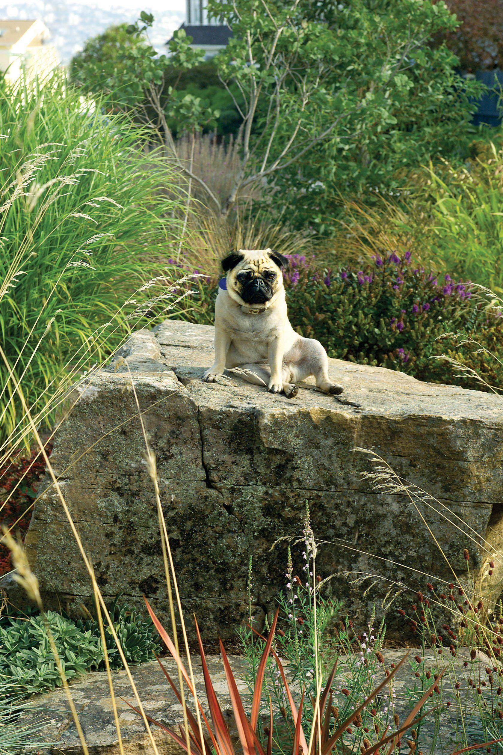 Backyard Ideas For Dogs Dog Friendly Garden Dog Friendly Backyard Dog Friends