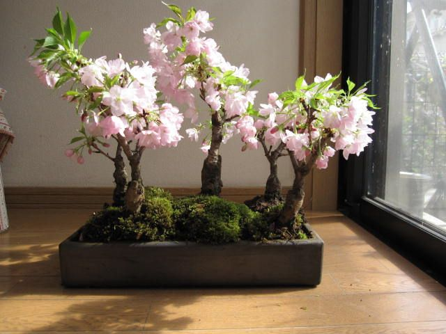 Uvg Miniature Cherry Blossom Tree Artificial Trees Indoor With Pink Flowers For Weddings Peach Blossom Tree Artificial Indoor Trees Blossom Trees