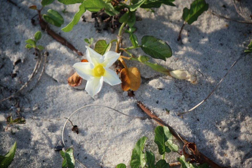 Flowers In The Sand Pensacolabeach