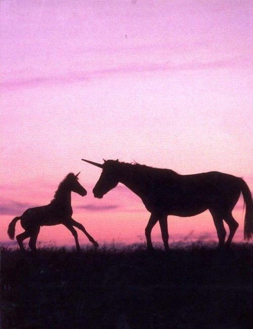 Unicorns Via Tumblr | My. Pretty. Pastels. | Pinterest | Unicorns ...