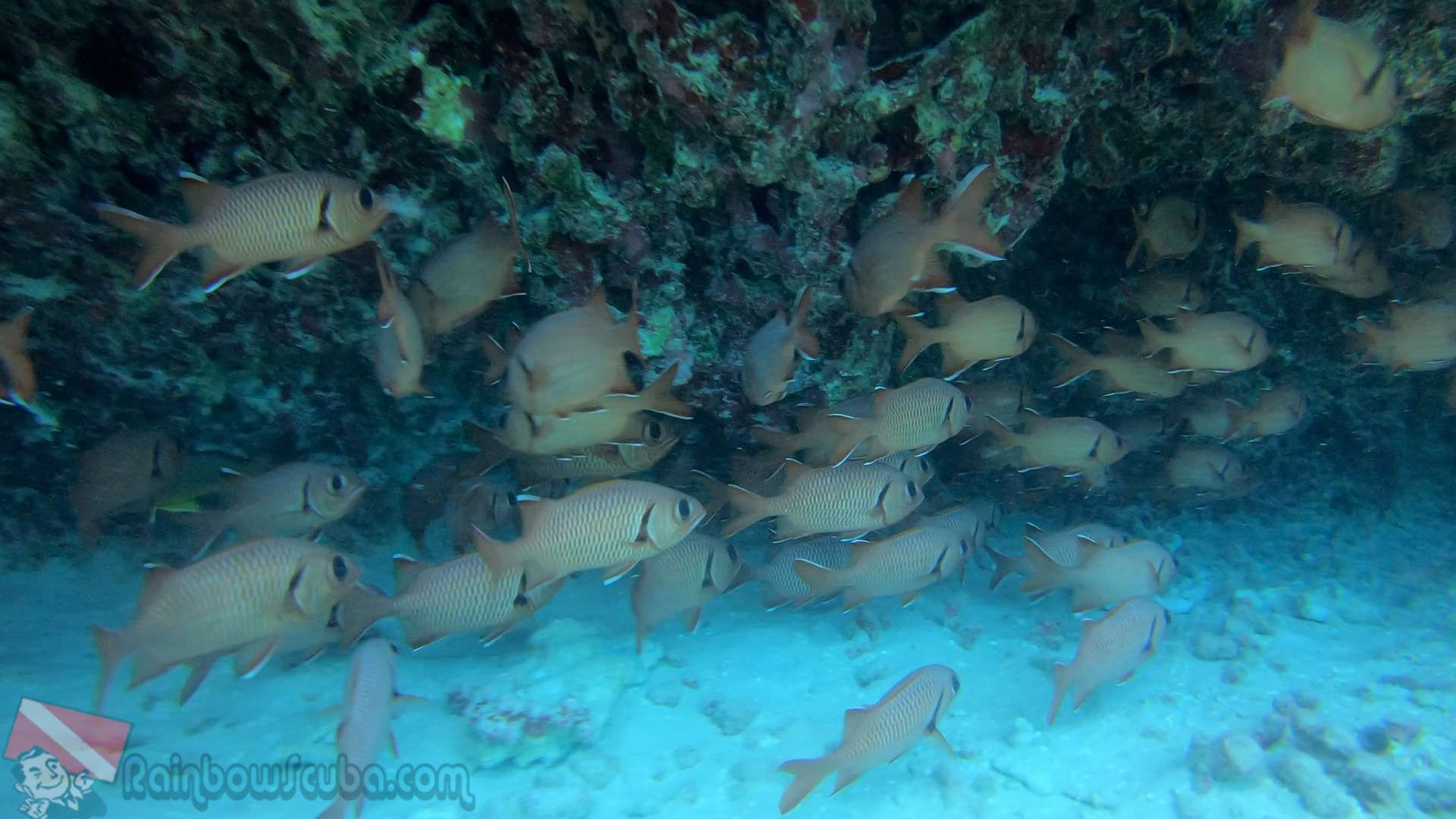 Scuba diving oahu by Rainbow Scuba Hawaii on Rainbow Scuba