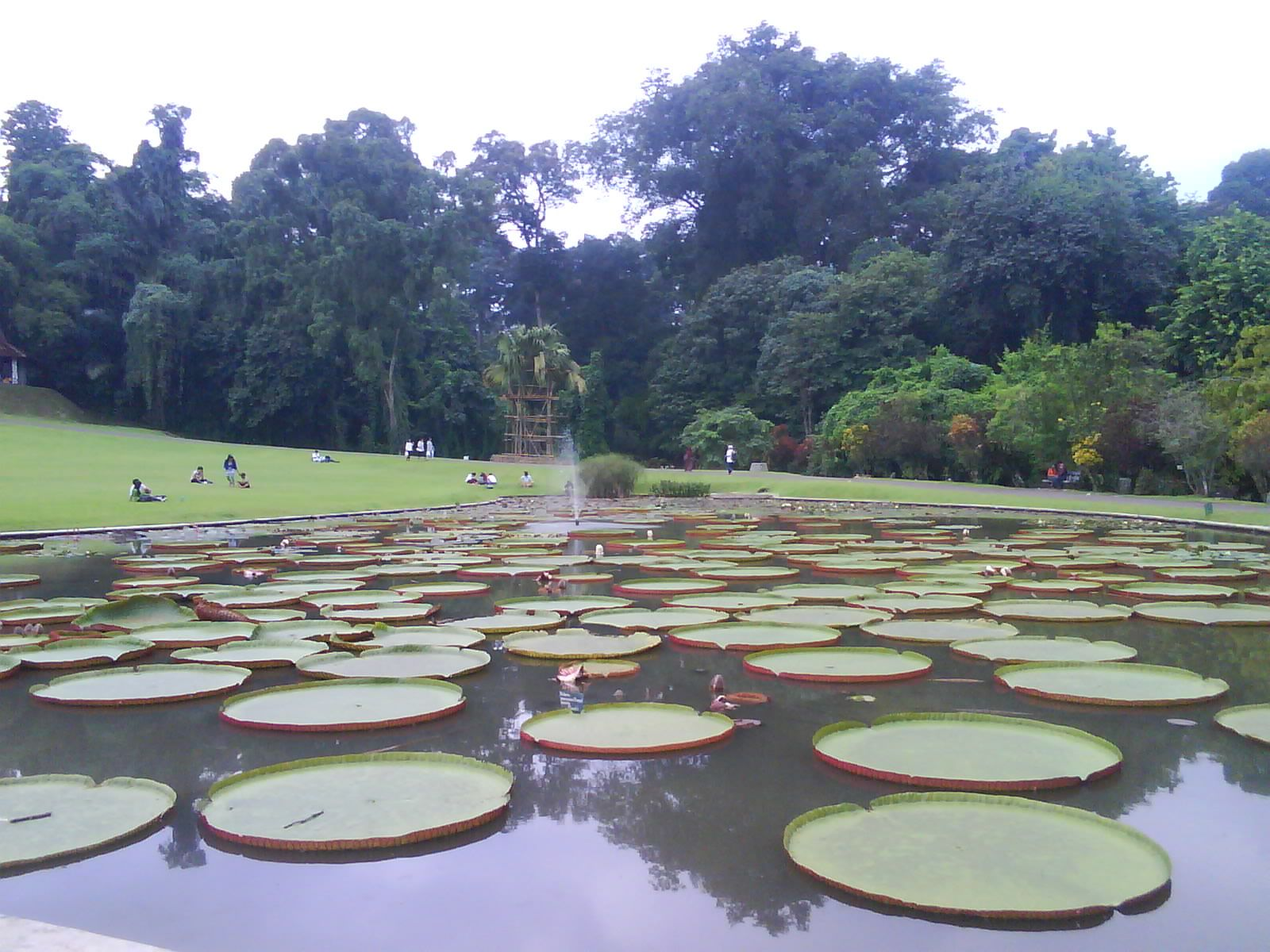 Bogor Botanical Garden's Pool