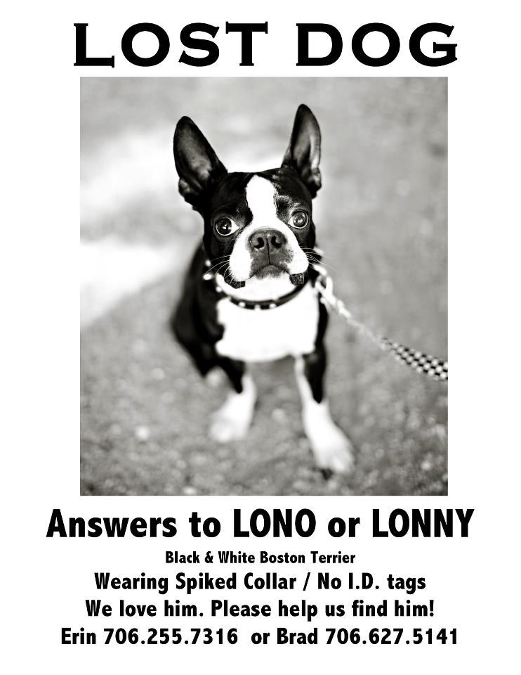 Bostonterrier Missing From Augusta Ga Plz Rt And Bring Lono