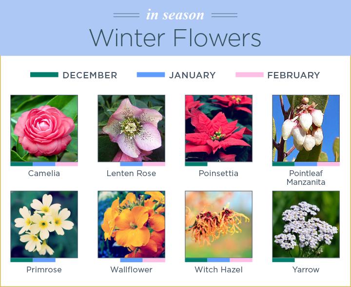 What Flowers Are In Season Winter Flowers In Season Avas