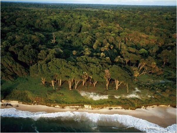 zerezas-curiosidadesvarias: Gabón Refugio Natural Paraiso de la Biodiversidad