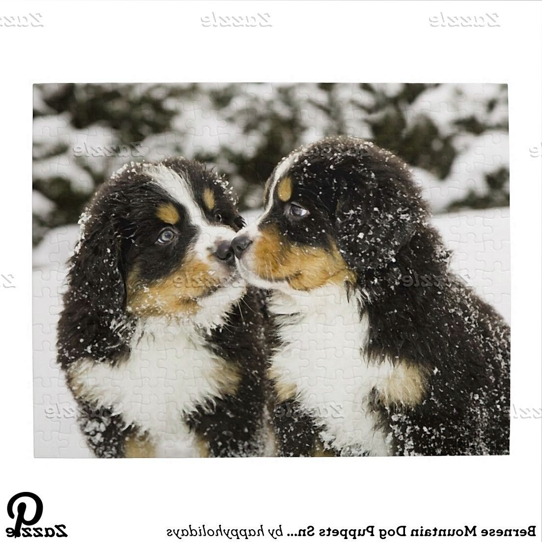 Bernese Mountain Dog Puppets Sniff Each Other Jigsaw Puzzle Bernese Mountain Dog Puppets Sniff Each Other Jigsaw Puzzle