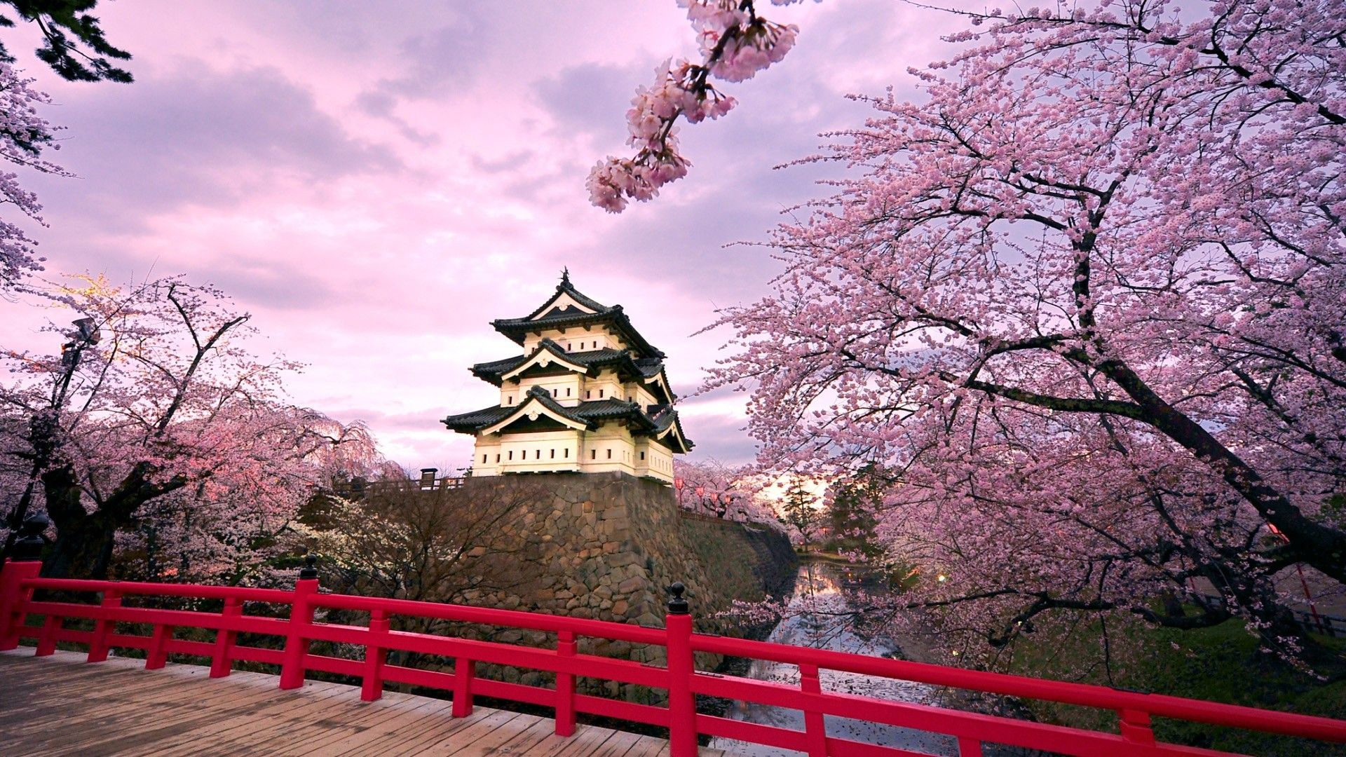 Japanese Cherry Blossom Garden Wallpapers Background For HD Wallpaper Desktop 1920x1080 Px 65709 KB