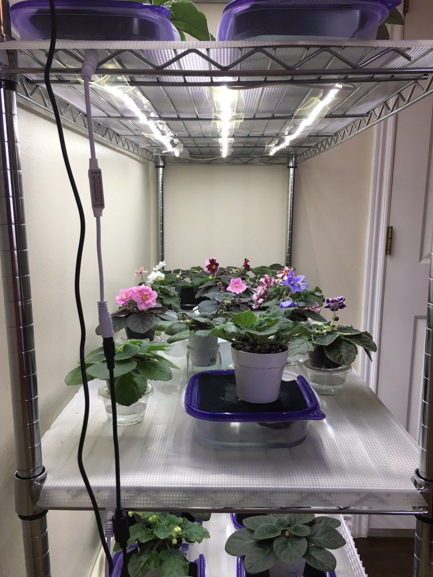 How To Grow Plants With Led Lights African Violet Light Stand Grow Lights For Plants Diy Plant Stand Indoor Grow Lights