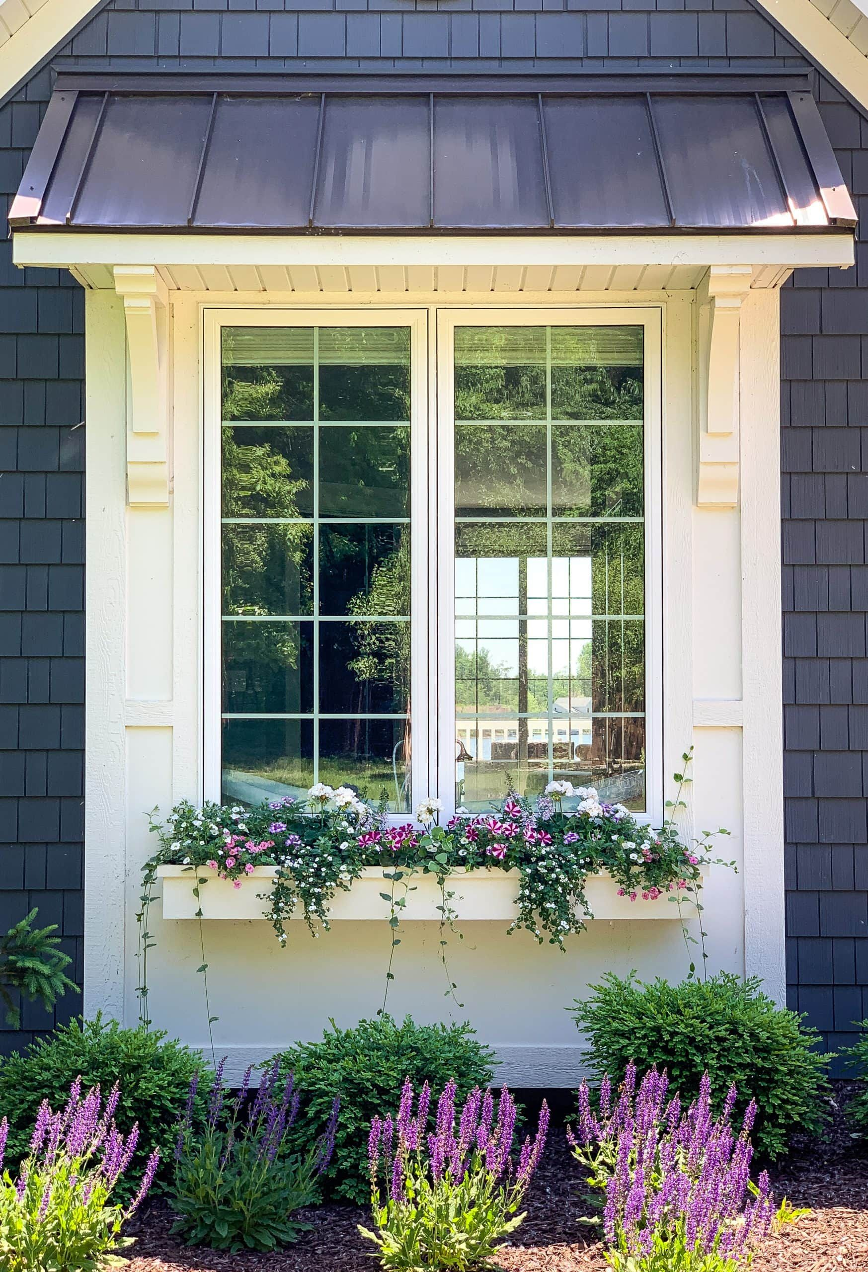 best flowers for sunny window boxes