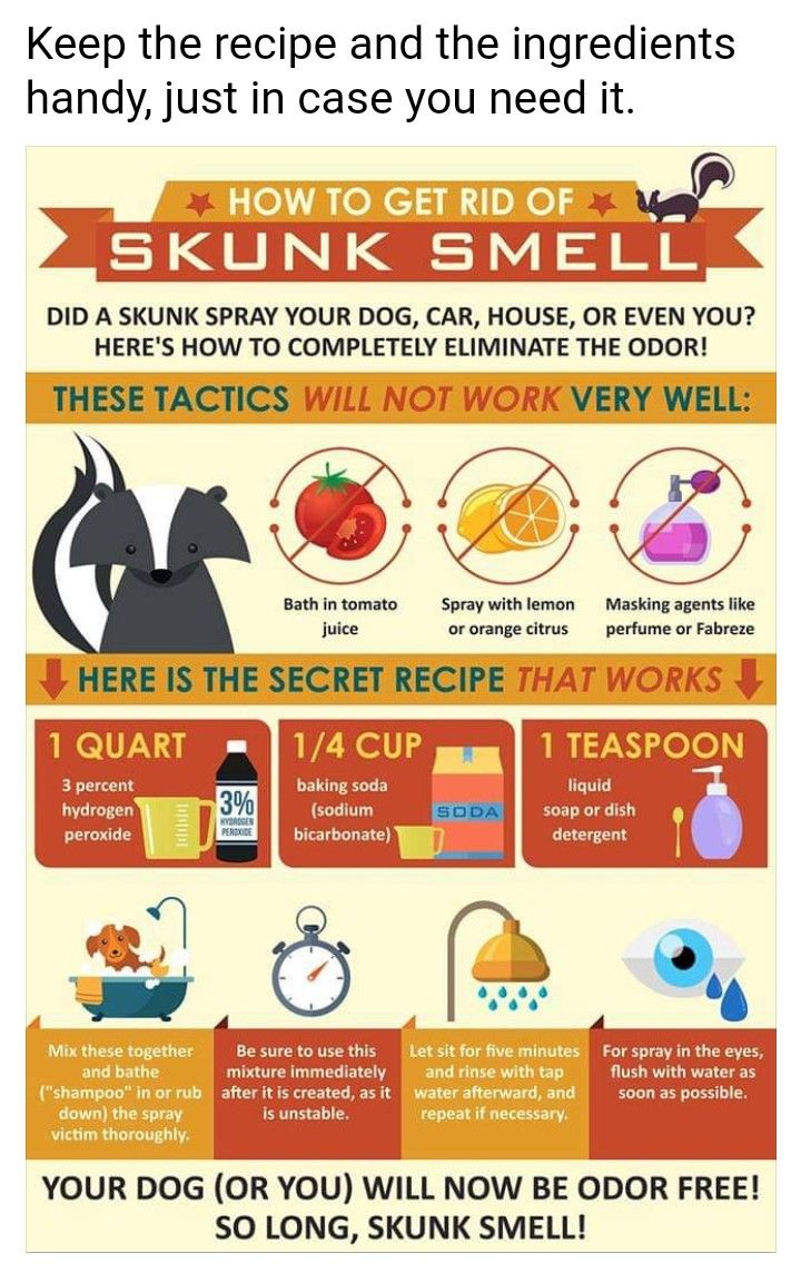 HOW TO GET RID OF SKUNK SMELL ON YOUR. DOGS OR CATS ...