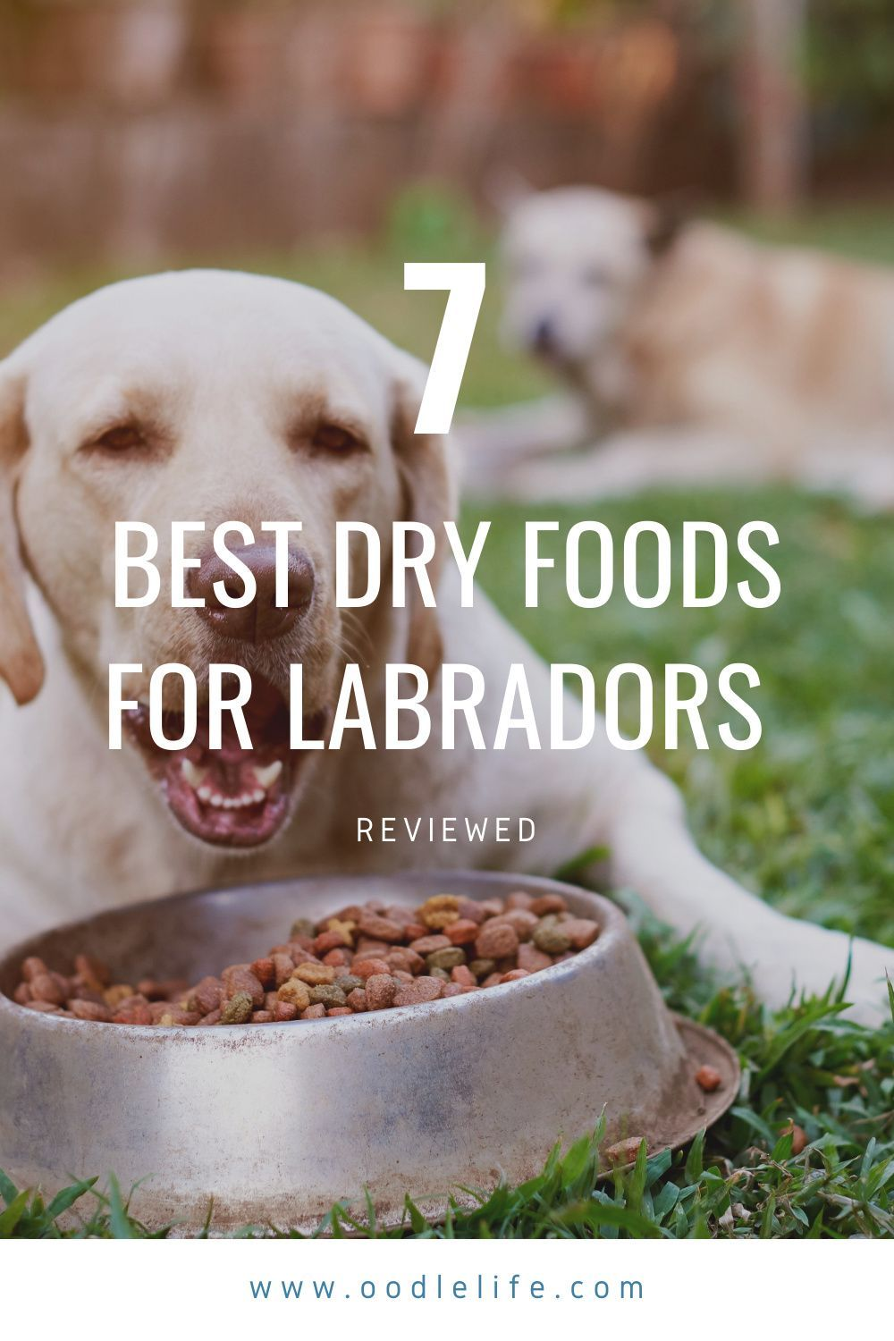 The 7 Best Dry Food For Labrador Reviewed Comparison Oodle Dogs Dog Nutrition Best Dry Dog Food Diet Dog Food