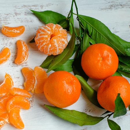 Gold Nugget Mandarin Tree Mandarin Tree Citrus Trees Fast Growing Trees