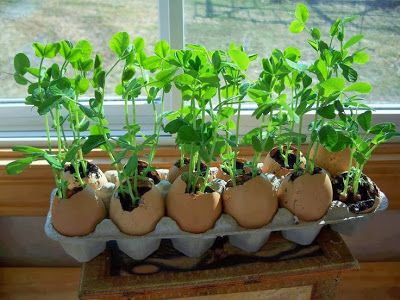 Growing Vegetable Ways On How to Grow Vegetable Garden From