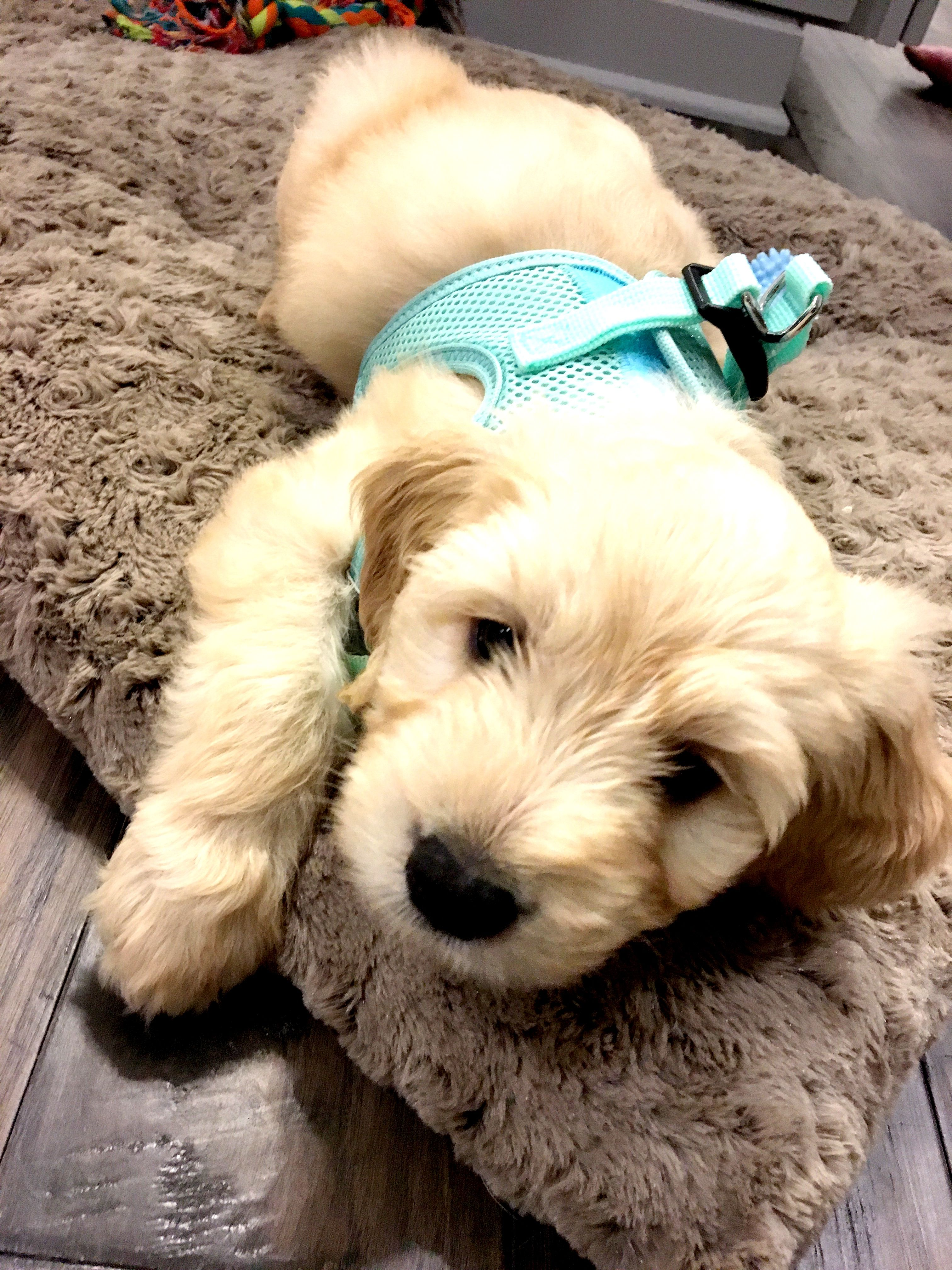 Pin on Puppies!