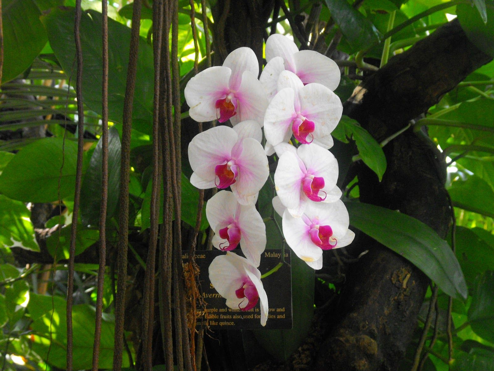 Orchids In Rainforest And beautiful orchids. Flora