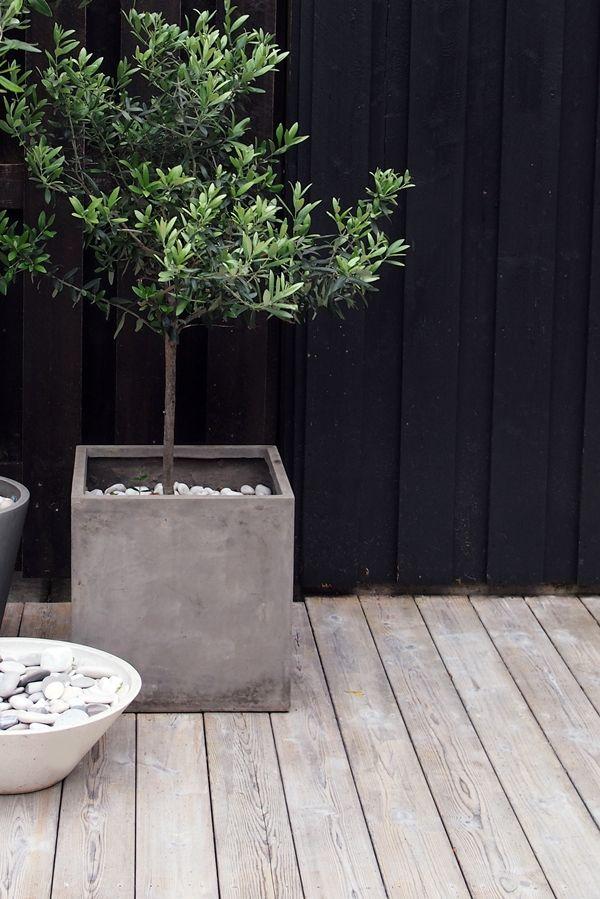 Boom In Pot Op Balkon.Amenager Une Terrasse En Angle Outdoor Design Garden Potted