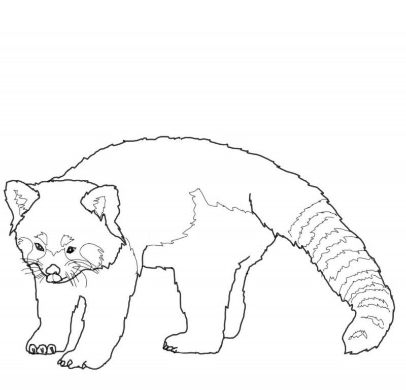 Red Panda Coloring Pages Free 75vp0834 Kids Coloring Book