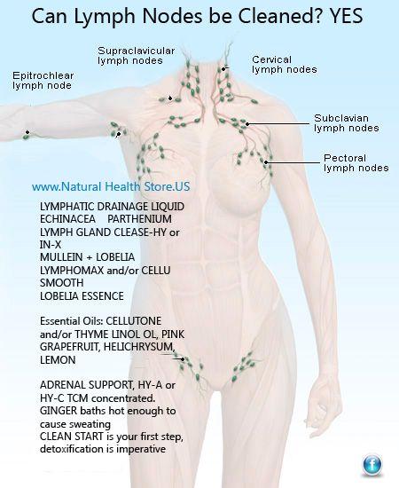 Wholistic Medicine Lymph Nodes Health At Home Health