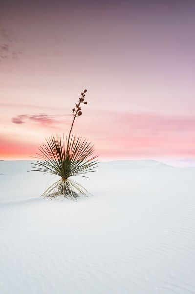 Dreamy Pink Sky At White Sands National Monument In New Mexico Fine Art Landscape Photography Fine Art Landscape Landscape Photography