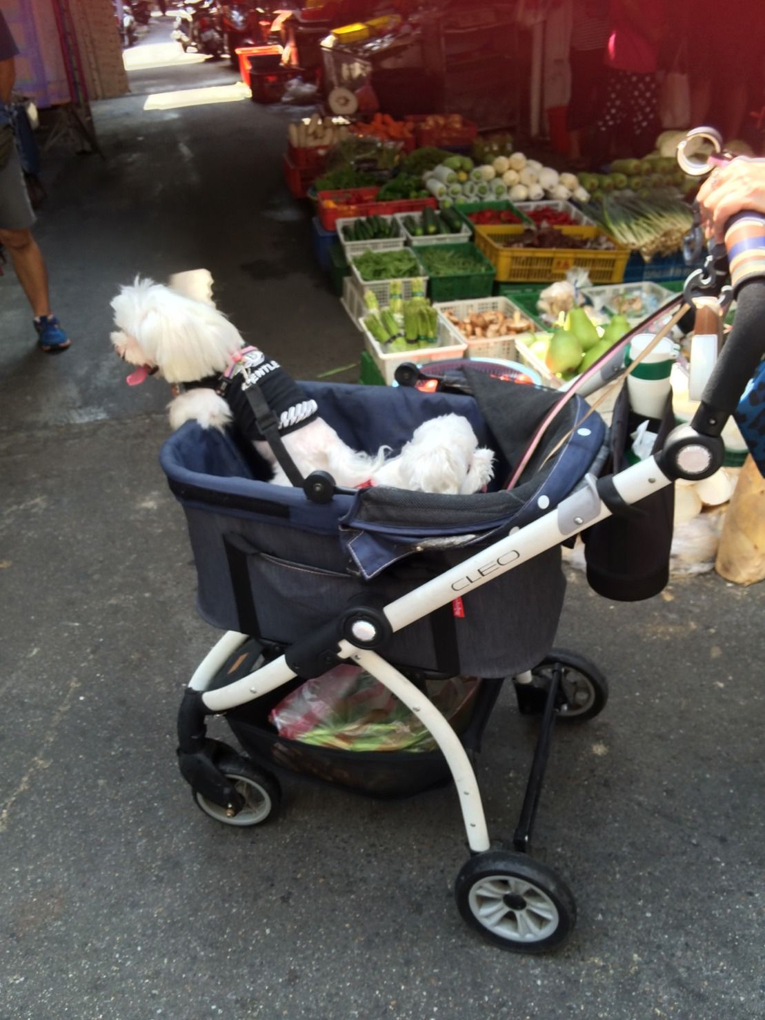 Not just a pet stroller but also a shopping cart...