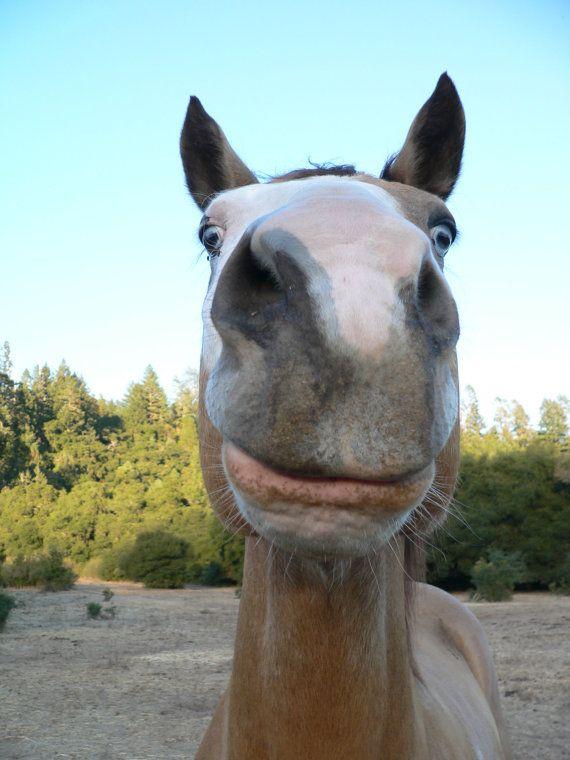 Funny Horse Face : funny, horse, Romeo's, Equine, Horse, Funny, AsherahPhotography,, .00, Horses,