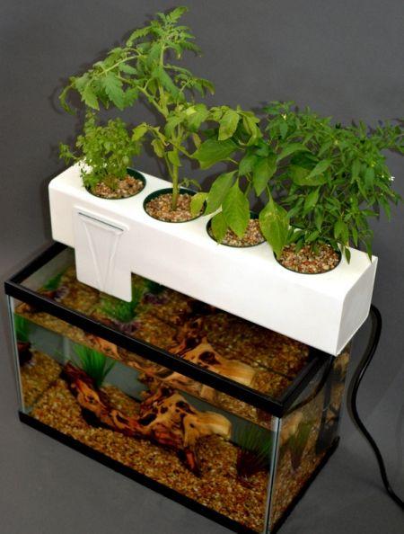 Diy aquaponic gardening google search aquaponics for Fish aquarium garden