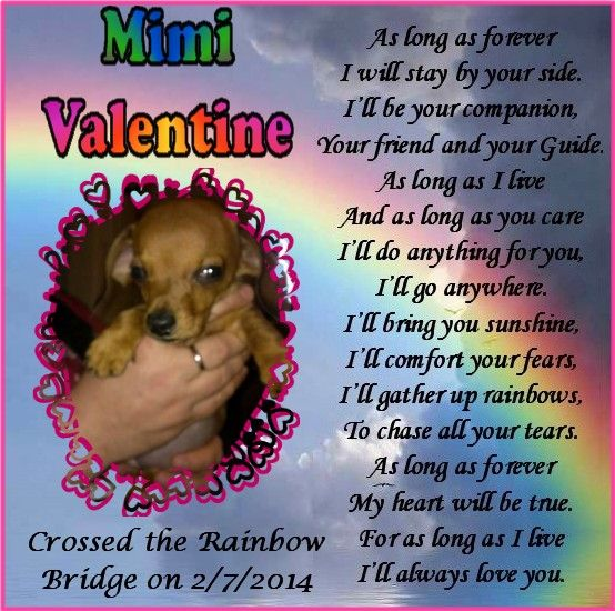 #OTRB #RAINBOWBRIDGE  Beloved puppy MIMI VALENTINE crossed the #RB on 2/7/14 (Memorial #1) Loved & Missed. xoxo