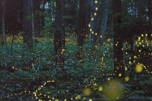 anachronisticfairytales:  Fairy Lights