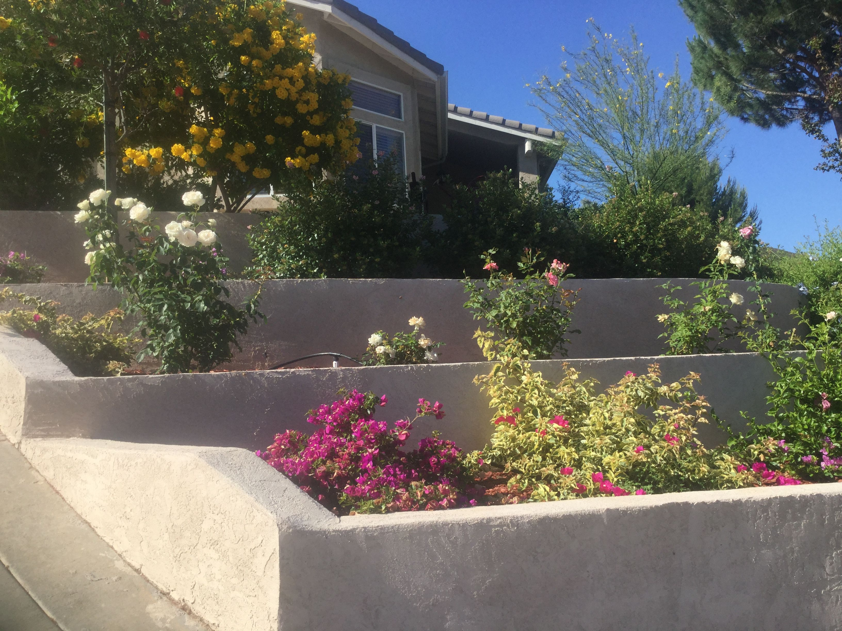 Tiered landscaping in my front yard. | Tiered landscape ... on Tiered Yard Landscaping id=54914