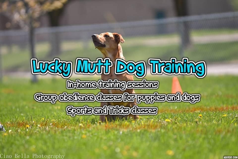 Pin By Lucky Mutt Dog Training On Dog Training Mutt Dog Dog