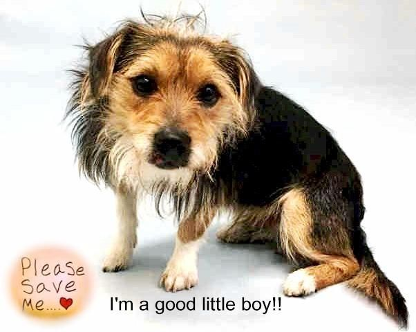 Rambo A1100215 Dog Adoption Animal Rescue Stories Animal Shelter