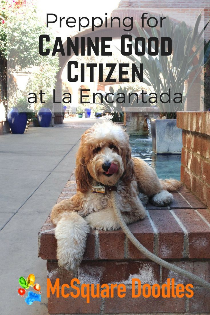 Prepping For Canine Good Citizen At La Encantada Puppy Training