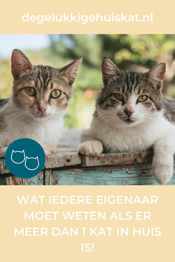 Multicat Huishouden Dan Is Dit Iets Wat Je Weten Moet In 2020 Cat Language Kitty Cats