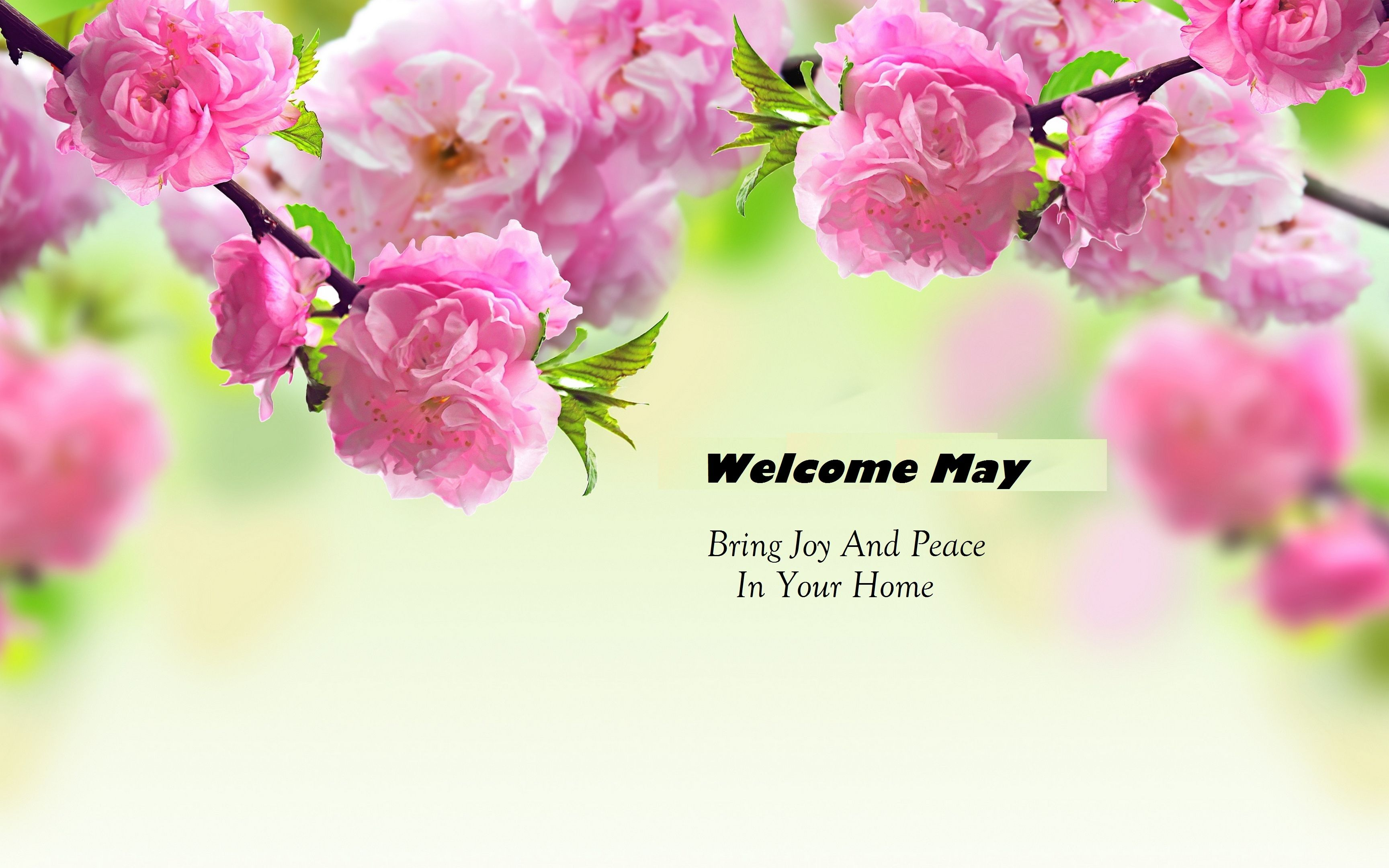 Welcome May Images Pictures Photos Wallpaper Free Download Hello