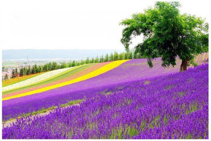 Dünyanın En Güzel çiçeklerien Güzel çiçek Resimleri Doğanin Renkleri