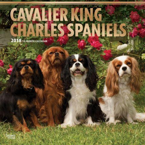 Cavalier King Charles 2020 Wall Calendar In 2020 Cavalier King Charles King Charles Dog King Charles Cavalier Spaniel Puppy