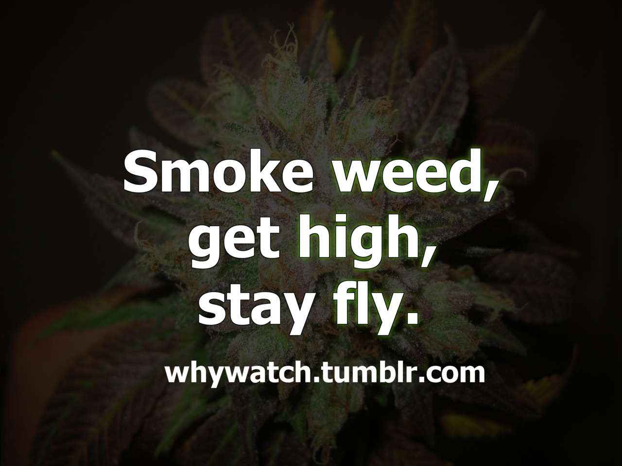 Funny weed pictures tumblr