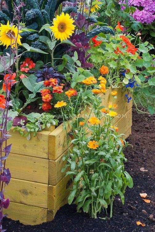 Sunflowers Calendula Veggies Marigolds Kale Raised 400 x 300