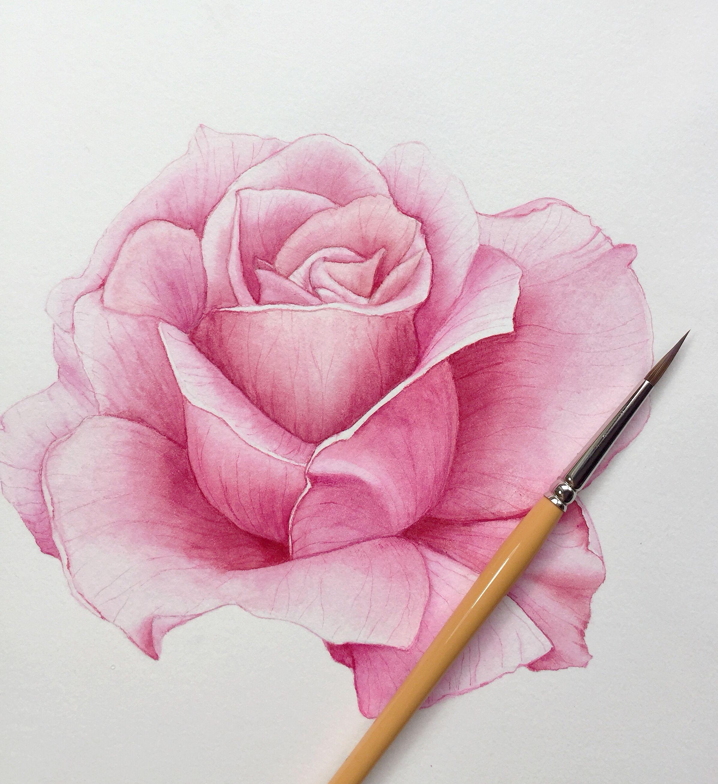 Pin De Rosangela Donin Em Estudo De Rosas Arte Em Aquarela