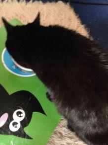 Sanoro Die Zweite Mia Ist Begeistert Katzen Futter Katzen Katzenfutter