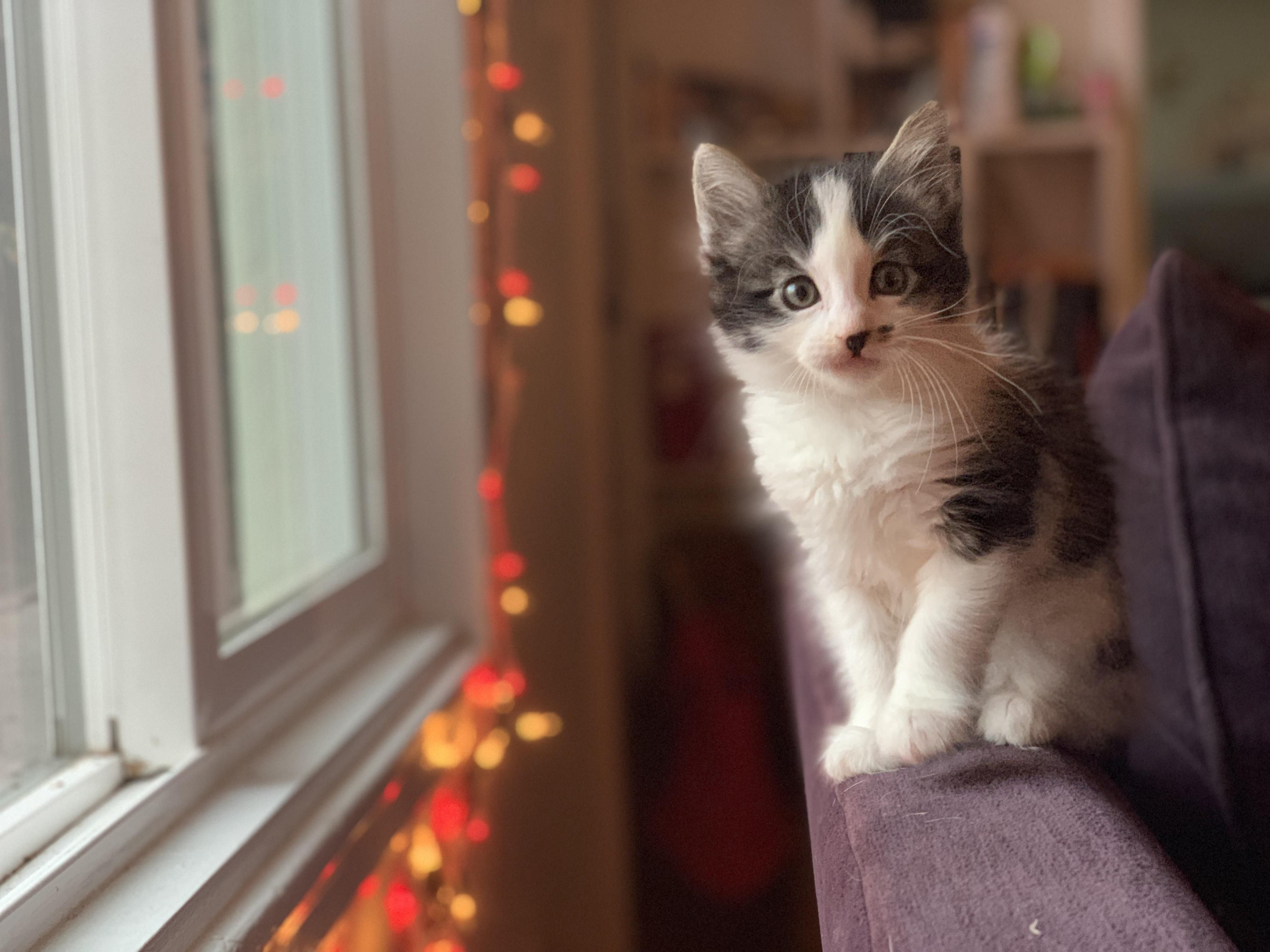 New Kitten Not Eating What Do I Do Hello There Bright People Are You Catlover Or Have You Any Pretty Cats I Think Cats Cat Having Kittens Cat Lovers