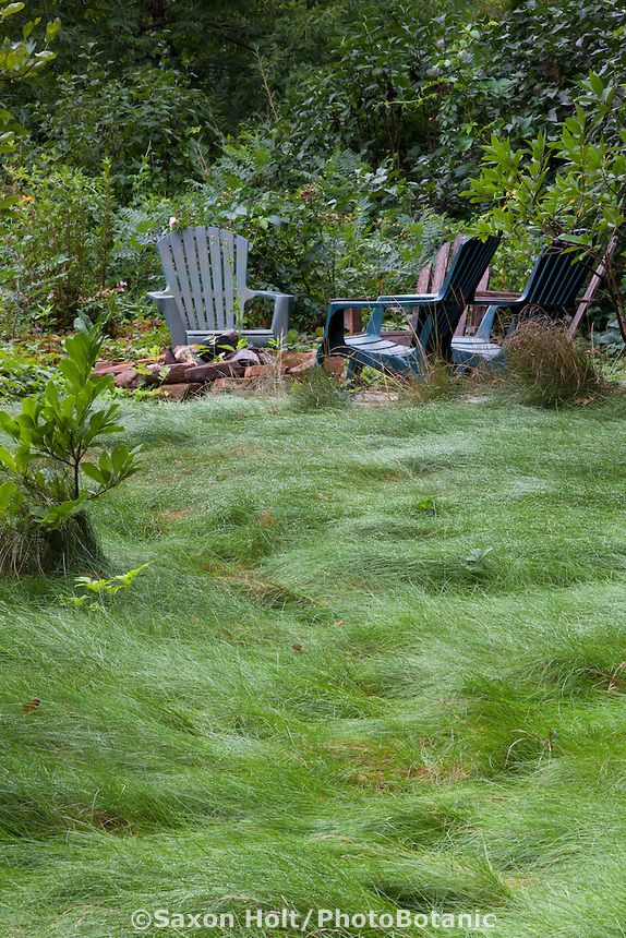 Chairs By No Mow Lawn With Fescue Meadow Grass Mix In Minnesota Garden Minnesota Garden Meadow Garden Lawn And Landscape