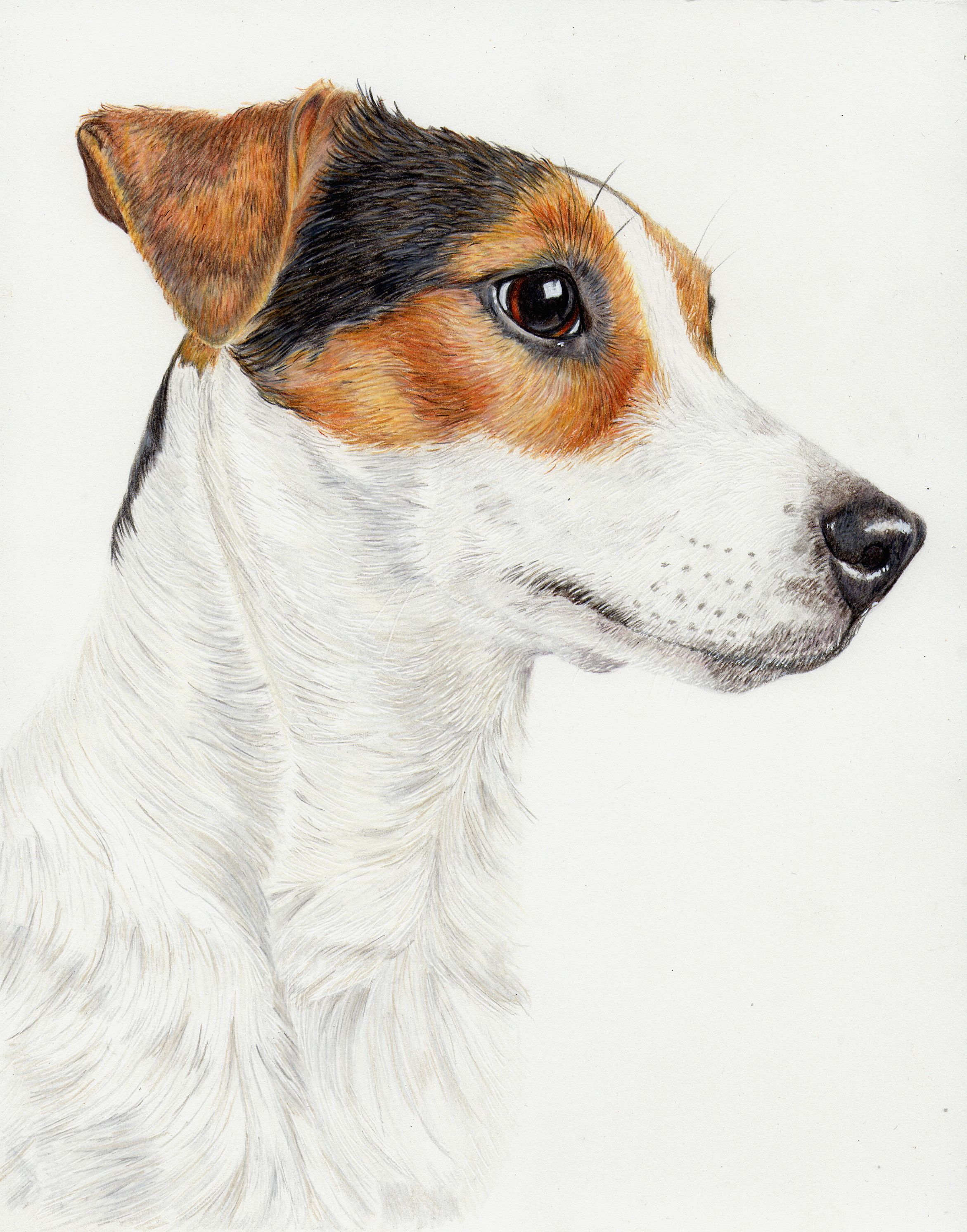 Jack Russell Black /& White Portrait Print Pet Picture Cute Dog Drawing Poster