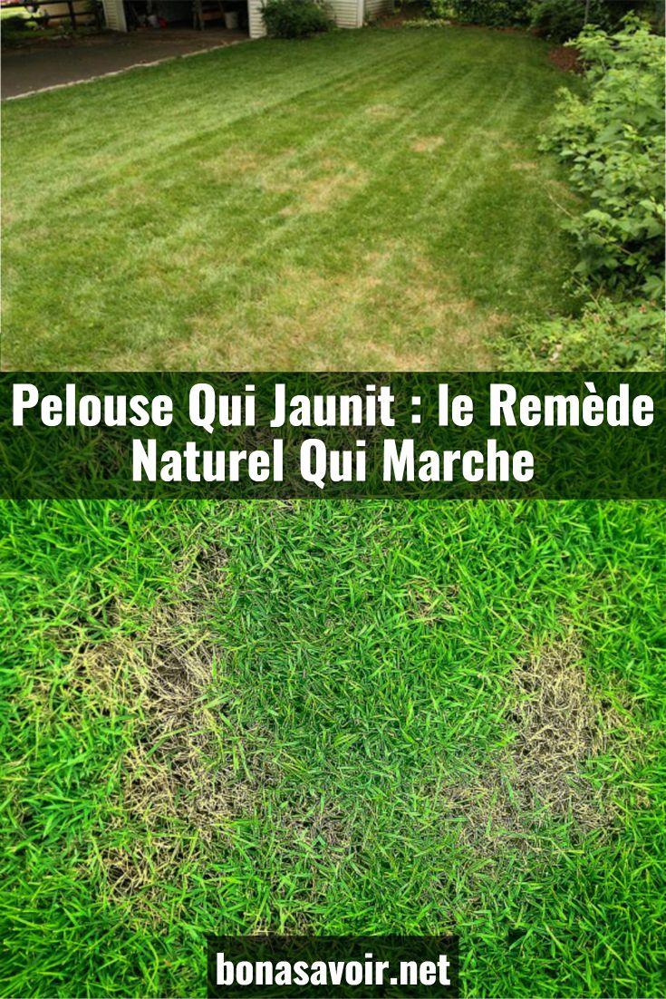 Pelouse Qui Jaunit Le Remede Naturel Qui Marche In 2020 Outdoor Outdoor Decor Nature