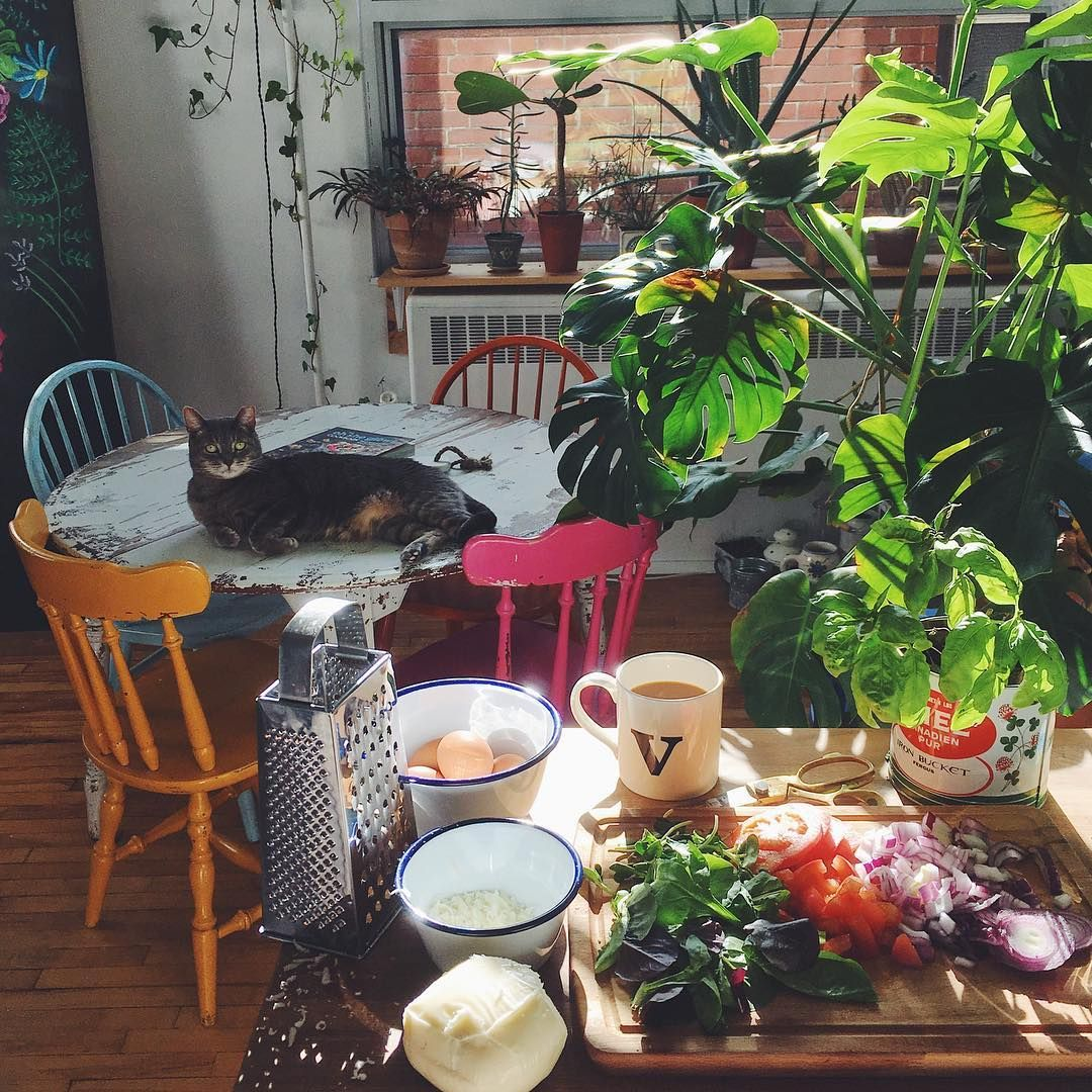 40+ Plants Fill This Couple's 500-Square-Foot Studio