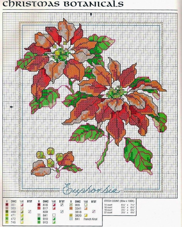 Пуансетия цветы схема